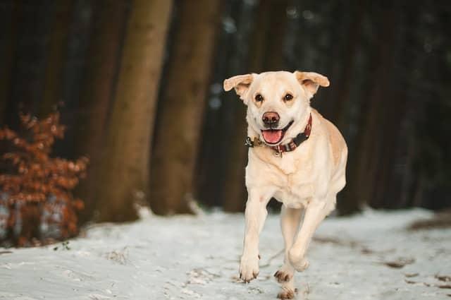 Een erg gewillige hond